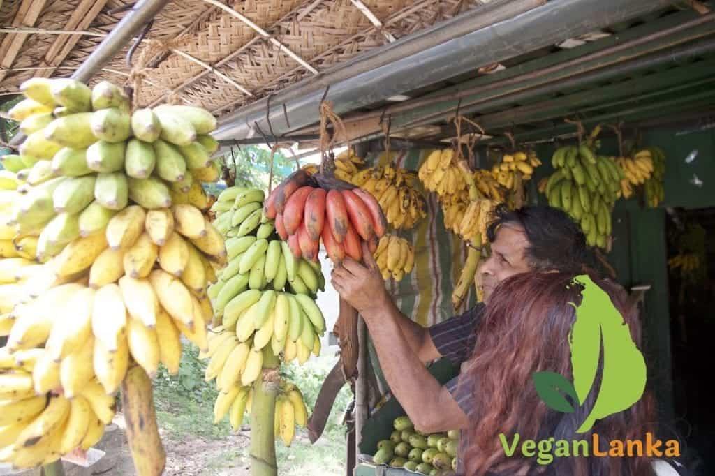 Red Bananas Sri Lanka
