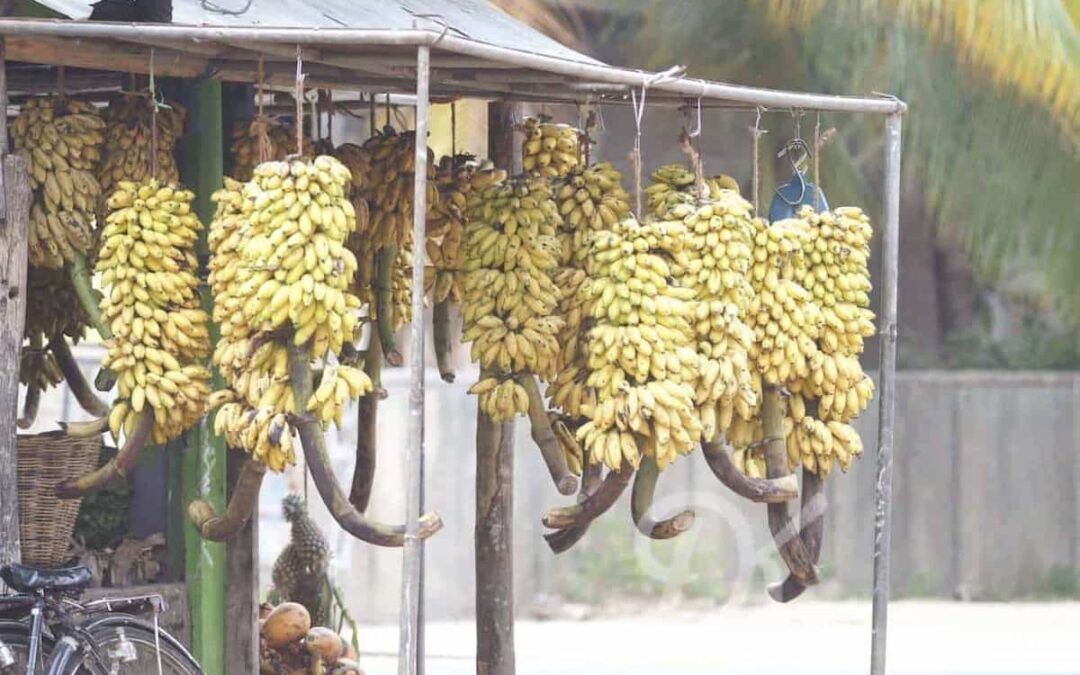 7 Amazing Types of Bananas You Must Try in Sri Lanka