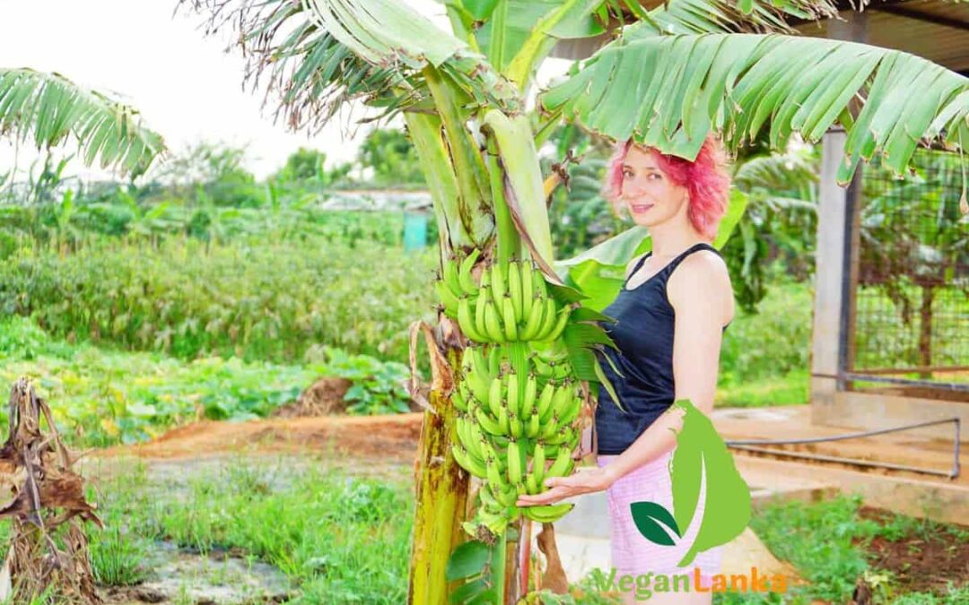 The Thinnai Organic Farm – Places to stay with Vegan Options in Jaffna