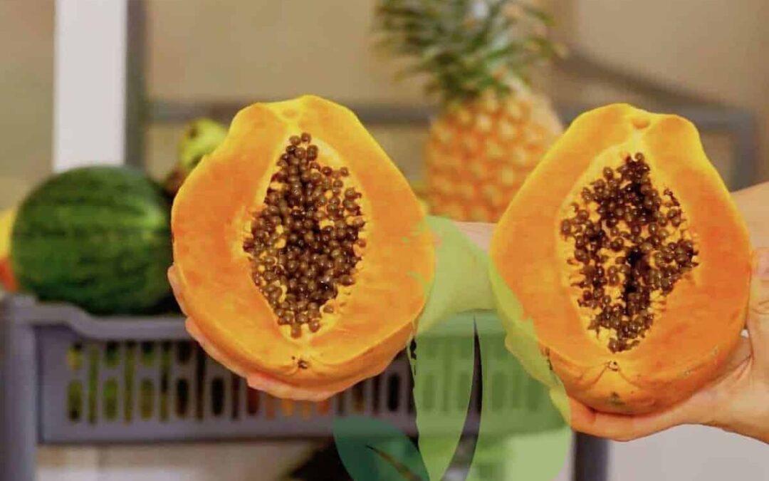 Papaya Fruit – Amazing Fruits of Sri Lanka You Must Try