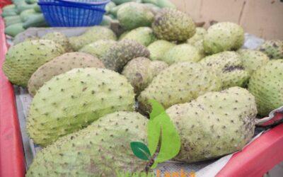 Sri Lankan Fruits – Superfruit Soursop/Graviola