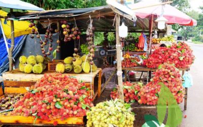 Rambutan – Exotic Fruits of Sri Lanka