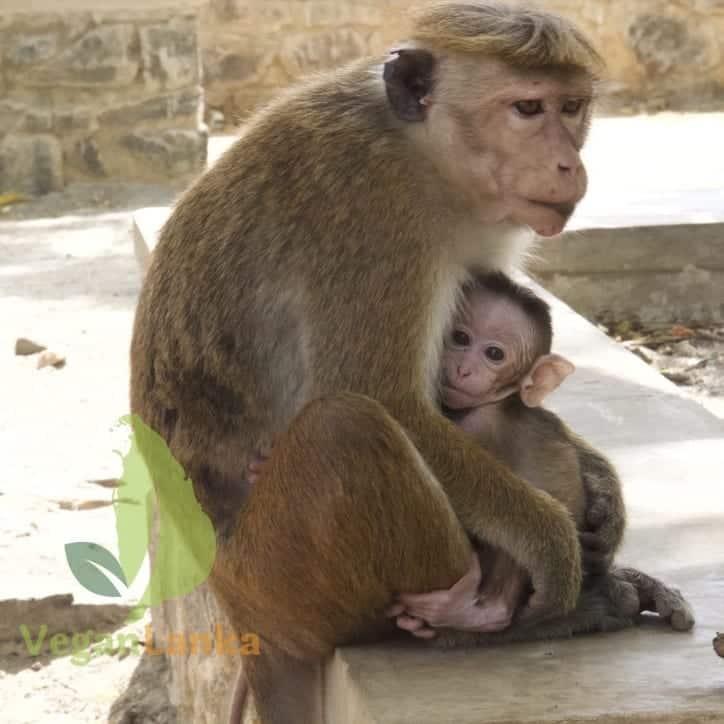 Tip 10: Monkeys