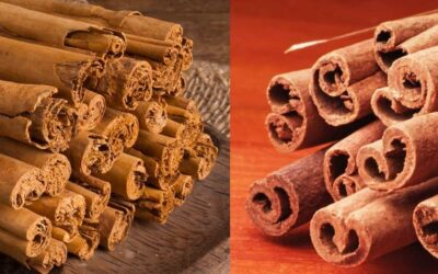Major Differences Between Ceylon Cinnamon and Cassia