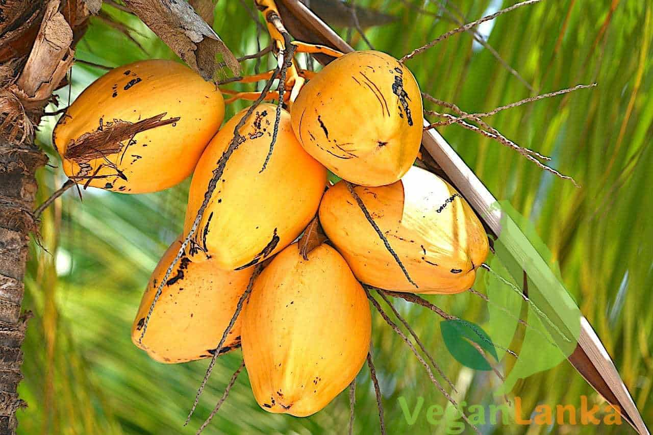 King Coconut: Amazing Fruits To Try In Sri Lanka