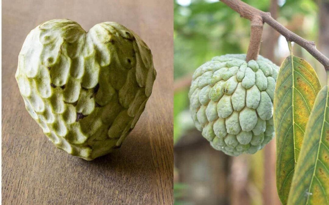 Sugar Apple or Custard Apple? What is the Difference?