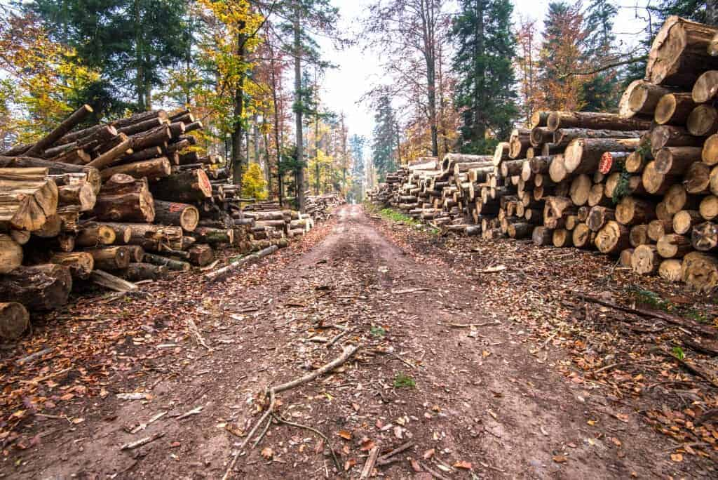 The Future of Tech Is Vegan: Deforestation - Timber harvesting in forest.