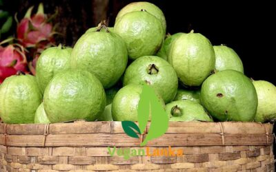 Guava – Fruits Must Try In Sri Lanka