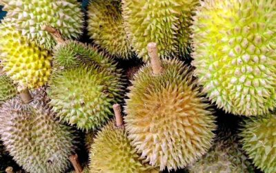 All You Can Eat Durian Buffet in Malaysia